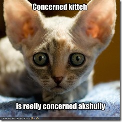 funny-pictures-your-cat-is-very-concerned